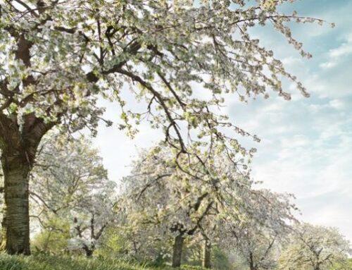 Estamos en primavera: a plantar y cultivar en marzo, abril y mayo
